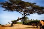 Иммиграция в Эфиопию