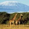 Известные факты про «черный континент»