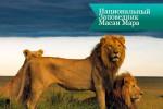 masai mara3 150x100 Национальный Заповедник Масаи Мара