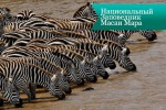 masai mara4 150x100 Национальный Заповедник Масаи Мара
