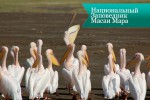 masai mara5 150x100 Национальный Заповедник Масаи Мара