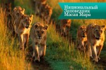 masai mara6 150x100 Национальный Заповедник Масаи Мара