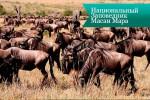masai mara7 150x100 Национальный Заповедник Масаи Мара