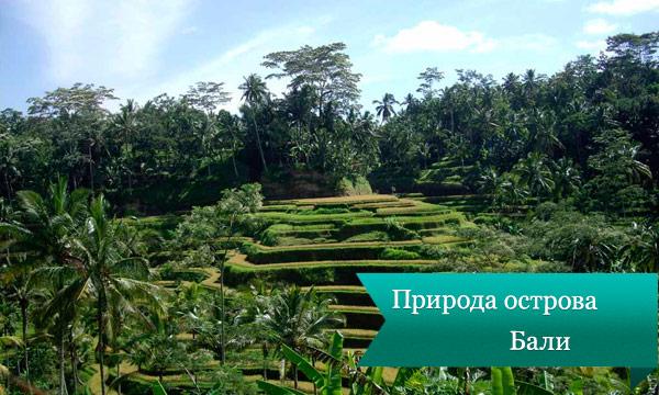 bali lesa Природа острова Бали