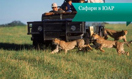 safari uar 433x260 Сафари в ЮАР