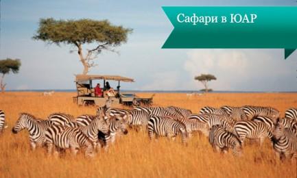 safari uar2 433x260 Сафари в ЮАР